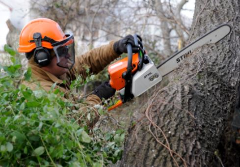 best tree professional Innisfil